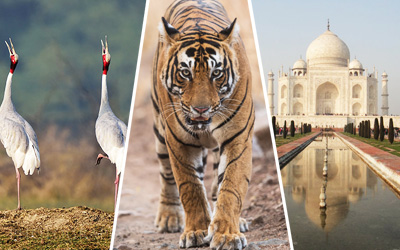 Birds Watching & Tigers Tour with Taj