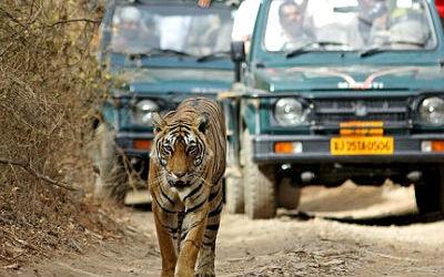 Half Day Safari at Ranthambore