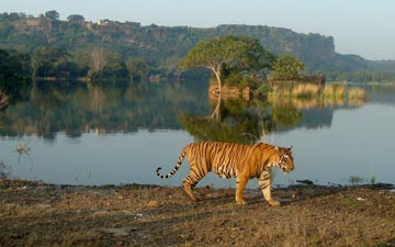 Best Tiger Safari Parks!