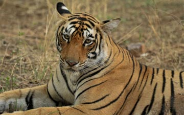 How to plan for Ranthambore!