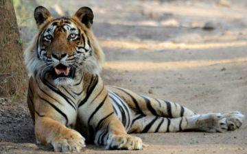 Premium Safaris: Plan early & save a lot!