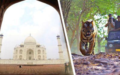 Tiger Safari with Taj