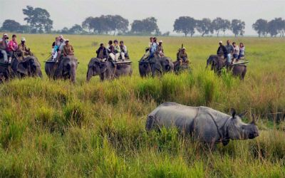 Wildlife Tour of East India