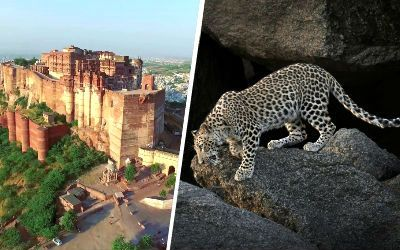Rajasthan Culture & Wildlife Safari Tour