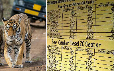 Ranthambore Safari Price 2020-2021