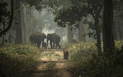 Dudhwa Kishanpur Wildlife Tour