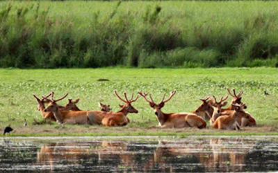 Katarniaghat Wildlife Sanctuary Tour