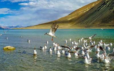 Ladakh Birding Tour