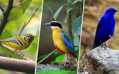 Sikkim Bird Watching Tour