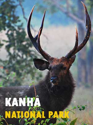 Kanha Safari Booking