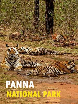 Panna National Park Safari