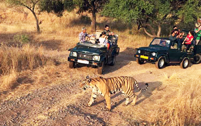 Jim Corbett National Park Safari Timings