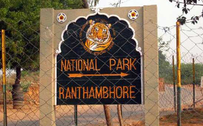Current Safaris Quota in Ranthambore