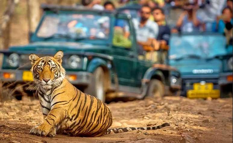 Ranthambore Safari Timings