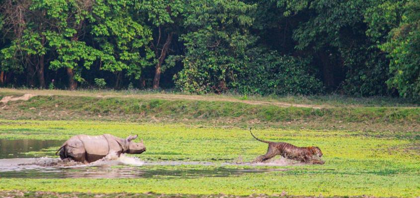 Kaziranga National Park, Assam - A UNESCO world heritage sites of India