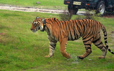 Ranthambore opens again after bad weather