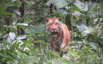 Good Safari Zones in Rainy Season!
