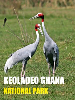Keoladeo Ghana National Park Safari