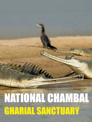 National Chambal Gharial Sanctuary